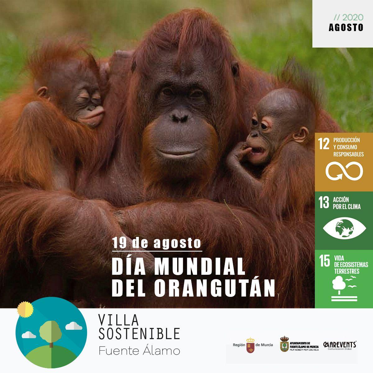 DÍA MUNDIAL DEL ORANGUTÁN - 19 AGOSTO