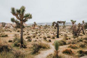 La desertificación se conoce como la degradación de las tierras de zonas áridas, semiáridas y subhúmedas secas, resultante de diversos factores, tales como las variaciones climáticas y las actividades humanas